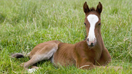 western equine Reproduction